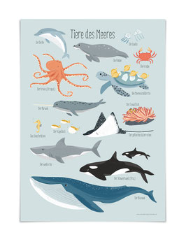 Tiere des Meeres Poster DIN A3