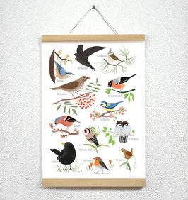 Heimische Vögel Poster + Posterleiste A3 Eiche