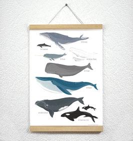 Wale Poster + Posterleiste A3 Eiche
