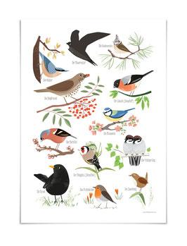 Heimische Vögel Poster DIN A3