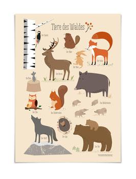 Tiere des Waldes Poster DIN A3