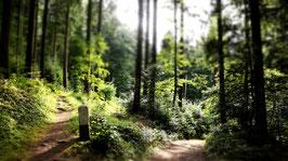 Der Kleine Pilgerweg - Pilgercoaching im Kloster Esthal