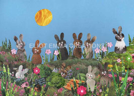 ST - 286 - LAPINS DANS LA PRAIRIE - BUNNIES IN THE MEADOW