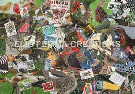 ST - 171 - LES OISEAUX DE NOS REGIONS - EUROPEAN BIRDS