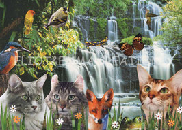 ST - 469 - CHATS et CHUTES D'EAU - CATS and WATERFALLS