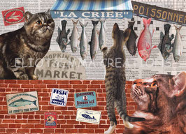 ST - 464 - CHATS et POISSONS - CATS and FISH