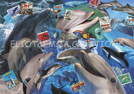 ST - 402 - DAUPHINS - DOLPHINS