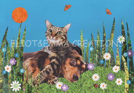 ST - 463 - CHAT et CHIEN - CAT and DOG