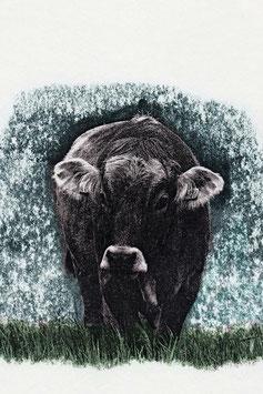 Kartenset «von kuh bis känguru»