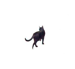 "Martin J. Eder - ""Schrödingers Katze"""