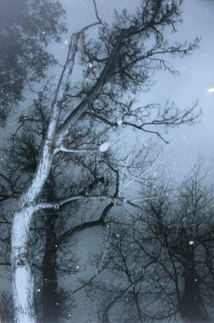 """Martin J. Eder - """"Winternacht im Park"""""""