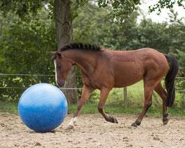 Ballon de jeu pour chevaux