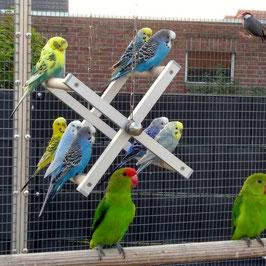 Riesenrad - Sittich und kleine Papageien
