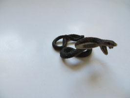 Schleich Kobra