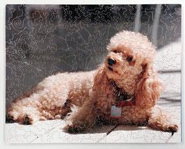 Custom Dog
