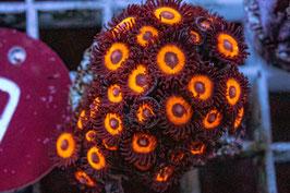 9 Jonny Pumpkin Seeds