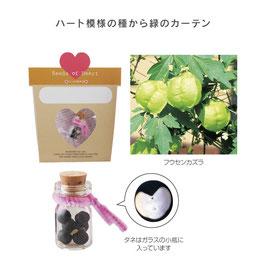 【カートン販売】【最安値】ハートのタネパック(小ビン入)【送料無料】