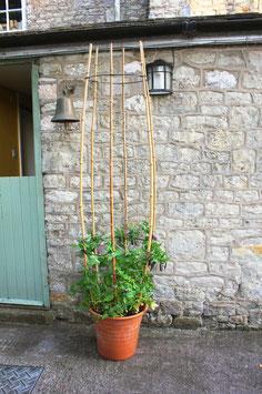 Bambus-Ringverbinder