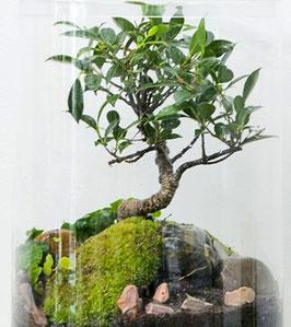 Garden XL / Bonsai 5 Jahre