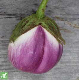 Violetta di Firenze