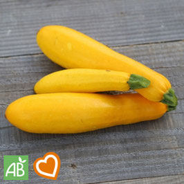 "Gelbe Zucchini ""Gold Rush"""
