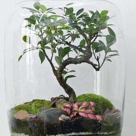 Forest medium Bonsai