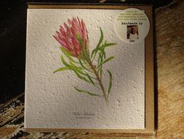 """Growing Paper Grußkarte """"Protea Repens"""" Willie Schlechter"""