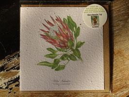 """Growing Paper Grußkarte """"Protea Cynaroides"""" Willie Schlechter"""