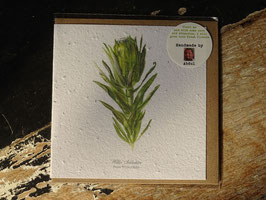 "Growing Paper Grußkarte ""Protea Coronata"" Willie Schlechter"