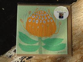 "Growing Paper Grußkarte ""Pincushion Protea"" Gemma Orkin"