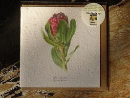 "Growing Paper Grußkarte ""Protea Grandiceps"" Willie Schlechter"