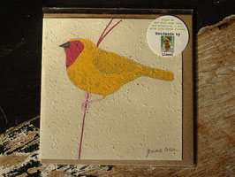 "Growing Paper Grußkarte ""Bird 2"" Gemma Orkin"