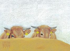 Kühe - SOLD