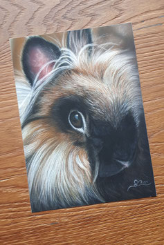 "FINE ART PRINT ""Little Bunny"", 15 x 20 cm"