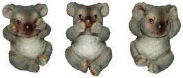 Koala die drei Weisheiten
