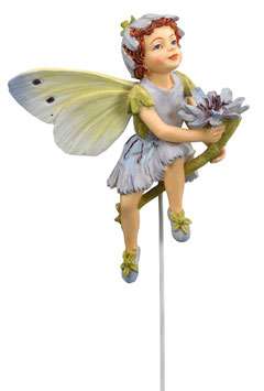 Flower Fairy - Wegwarte