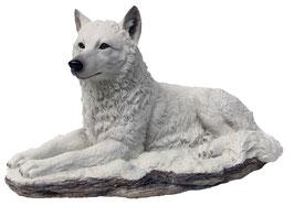 Wolf liegend weiss