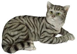 Katze liegend grau