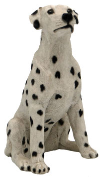 Hund - Dalmatiner sitzend