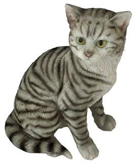 Katze sitzend grau