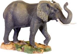Elefanten-Bulle