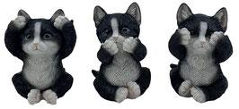 Katzen die drei Weisheiten schwarz