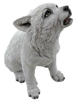 Wolf-Welpe heulend weiss