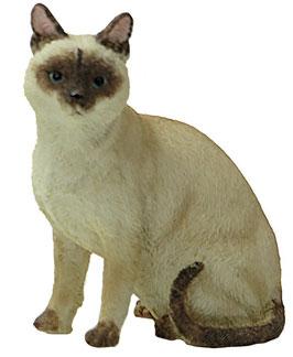 Katze Tonkanese