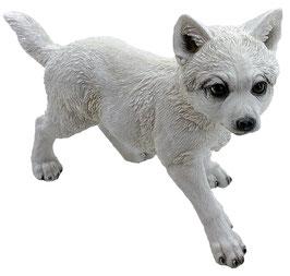 Wolf-Welpe laufend weiss