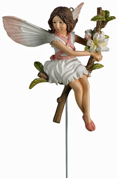 Flower Fairy - Wildkirsche