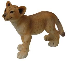 Löwen-Junge stehend