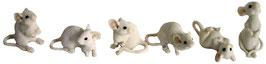 Mäuse weiss 6ass.