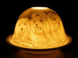 Porzellan - Windlicht Bichon Hunde