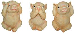 Schwein die drei Weisheiten